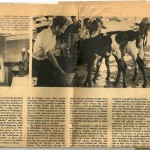 Hadassah newspaper - 1971 unknow title Page 1