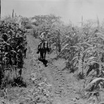 Settler with child inspecting the corn crop